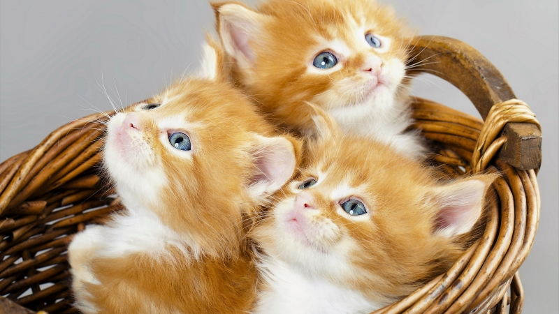 Animal Cat 5 4K HD Animals Wallpaper