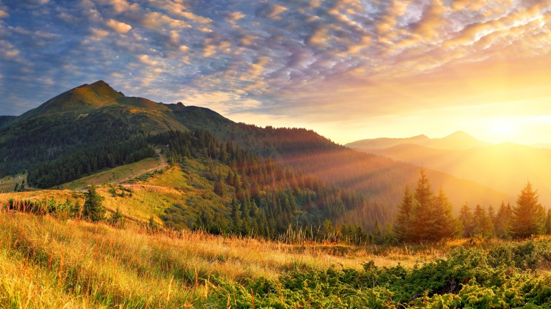 Green Trees With Green Covered Mountain Scenery Morning Sun Rays 4K HD Nature Wallpaper
