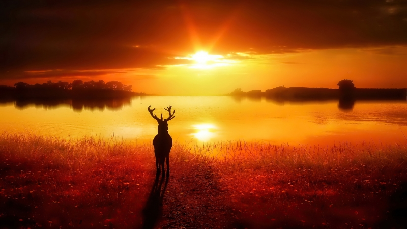 Silhouette Reindeer Standing In Front Of Lake During Sunset Time 4K HD Nature Wallpaper