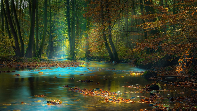 Sun Light Passing Through Green Trees Between River Sunbeam Autumn 4K HD Nature Wallpaper