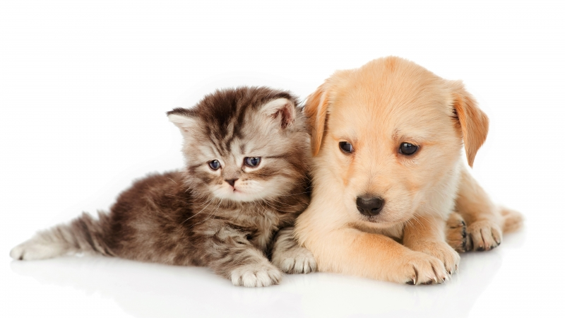 Animal Cat & Dog 4K 5K HD Animals Wallpaper
