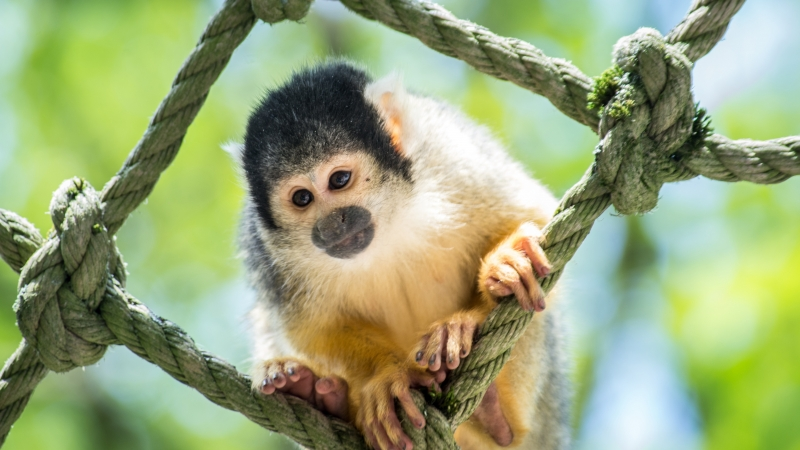 Animal Monkey 4K 5K HD Animals Wallpaper