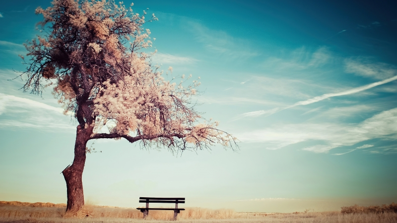 Clear Blue Sky Under Winter Tree Bench 4K HD Nature Wallpaper