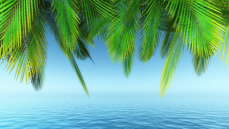 Earth Palm Tree Under Blue Seashore 4K 5K HD Nature Wallpaper