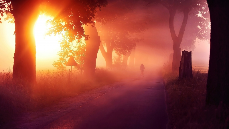 Sun Rays Passing Through Between Trees With Mist Road 4K HD Nature Wallpaper