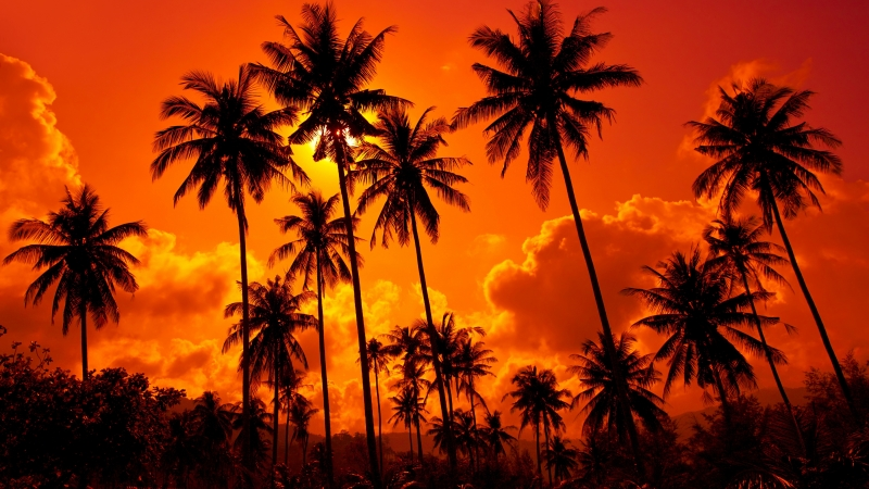 Beautiful Red Clouds Under Cocunet Trees During unset Time 4K 5K HD Nature Wallpaper