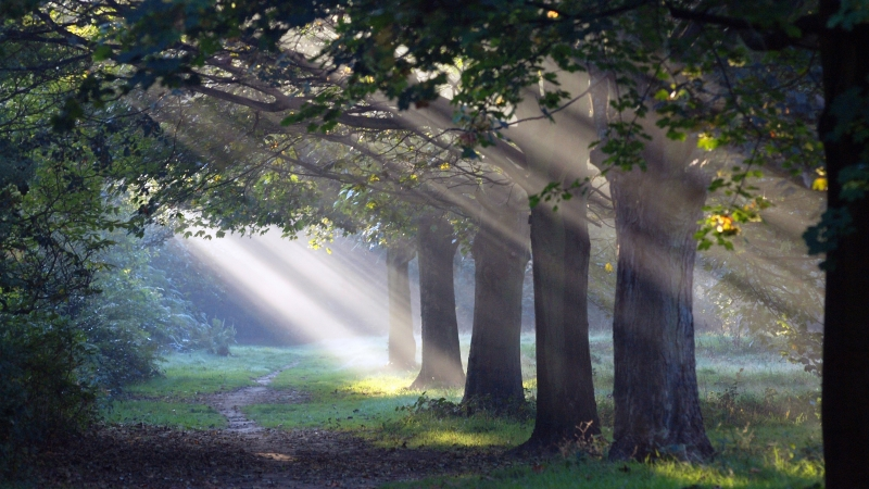 Sunlight Passing Through Green Leaves And Trees With Man Made Road 4K HD Nature Wallpaper