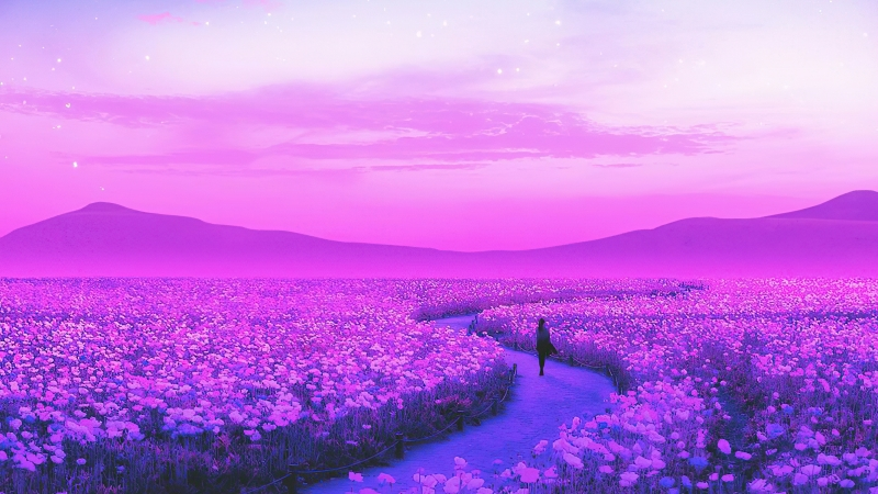 Day Dreaming Lavender Field 4k Wallpaper
