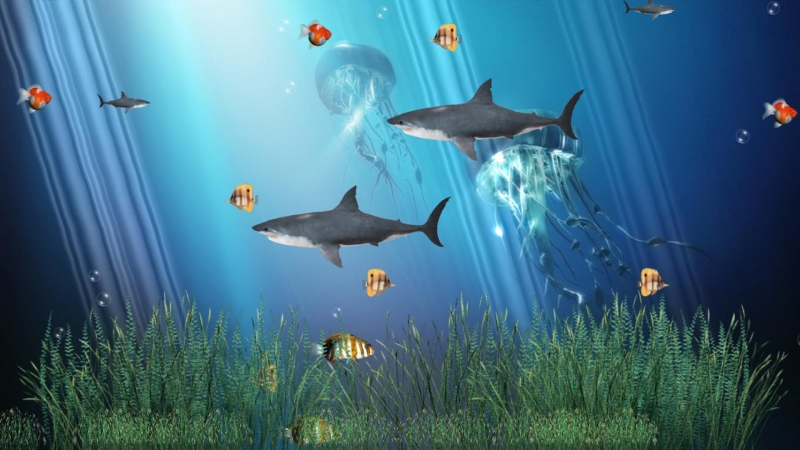 Animated Underwater Colorful Fishes HD Animated Wallpaper