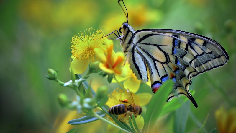 Beautiful Colorful Butterfly On Yellow Flower In Blur Green Background 4K 5K HD Butterfly Wallpaper