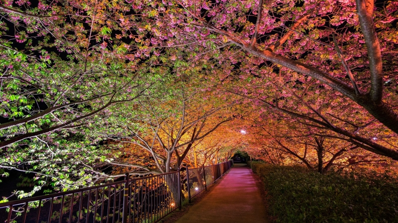 Beautiful Night Spring Park Alley Lights HD Nature Wallpaper