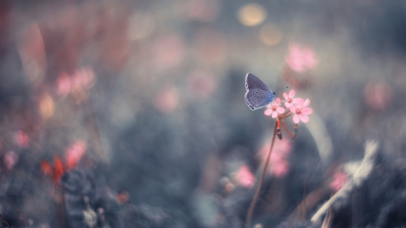 Butterfly On Pink Flower HD Butterfly Wallpaper