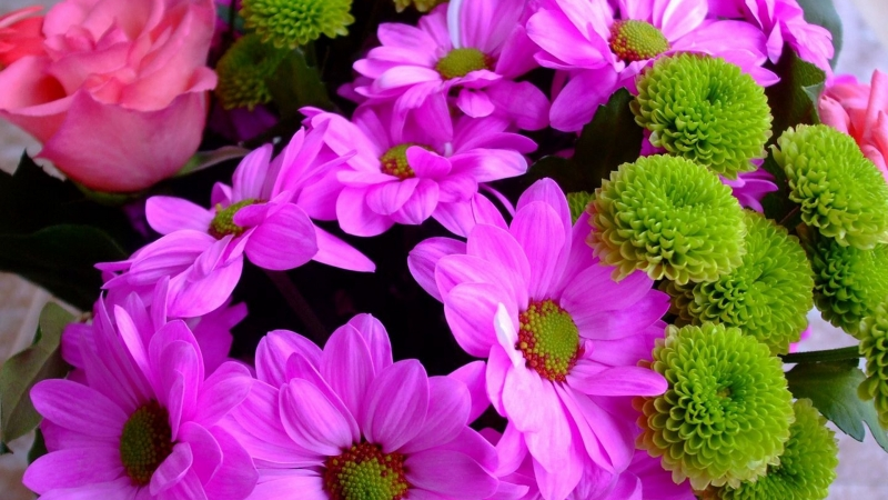 Colorful Chrysanthemums Roses Flowers HD Flowers Wallpaper