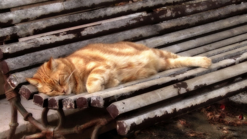 Cute Cat Is Sleeping On Wood Bench HD Cat Wallpaper