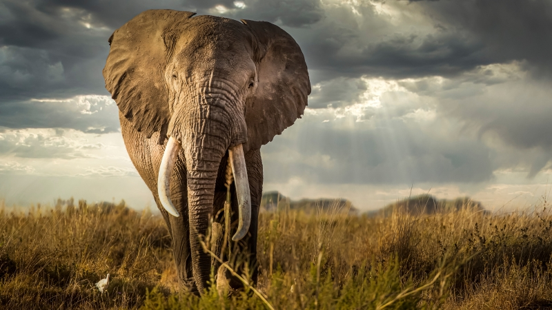 Elephant Is Standing On Green Grass In Sky Background 4K 5K HD Elephant Wallpaper