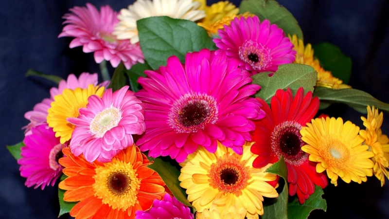 Gerbera Flower Bouquet Bright Colorful Floral HD Flowers Wallpaper