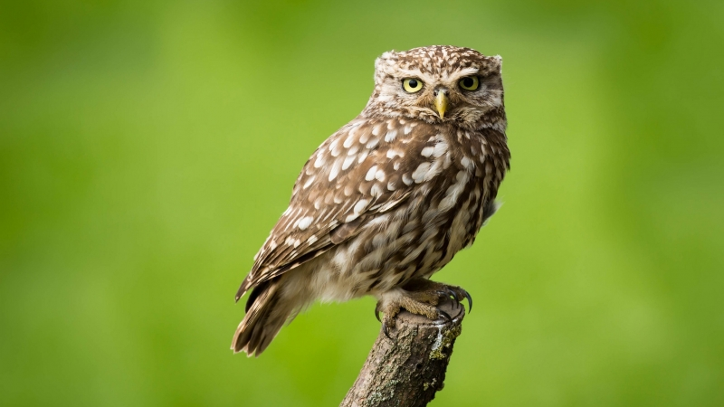 Owl Is Standing On Tree Trunk In Green Background HD Owl Wallpaper