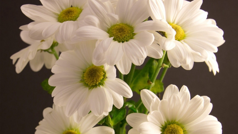 White Bouquet Flowers Petals HD Flowers Wallpaper