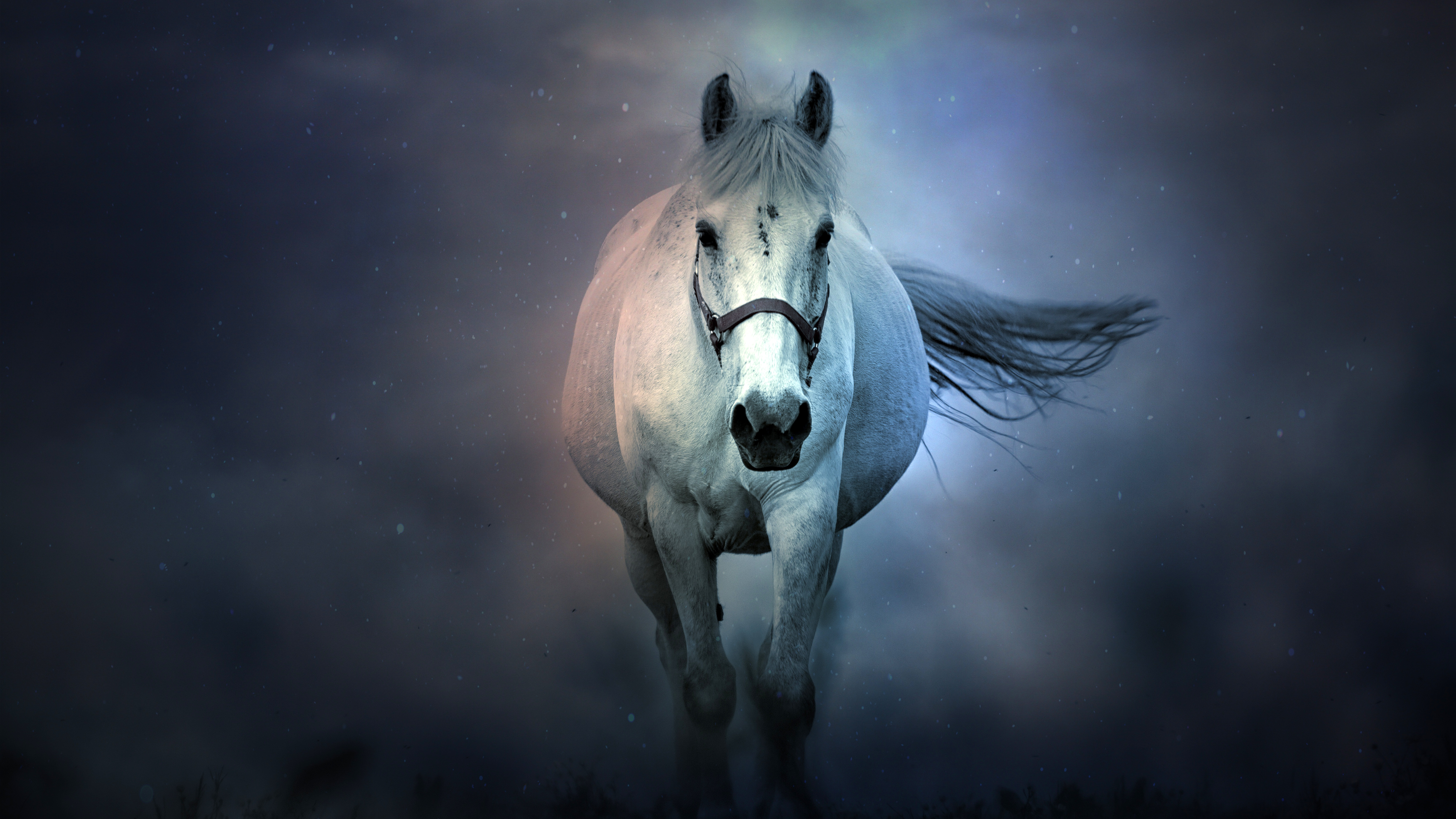 1 White Horse Hd Wallpapers Backgrounds