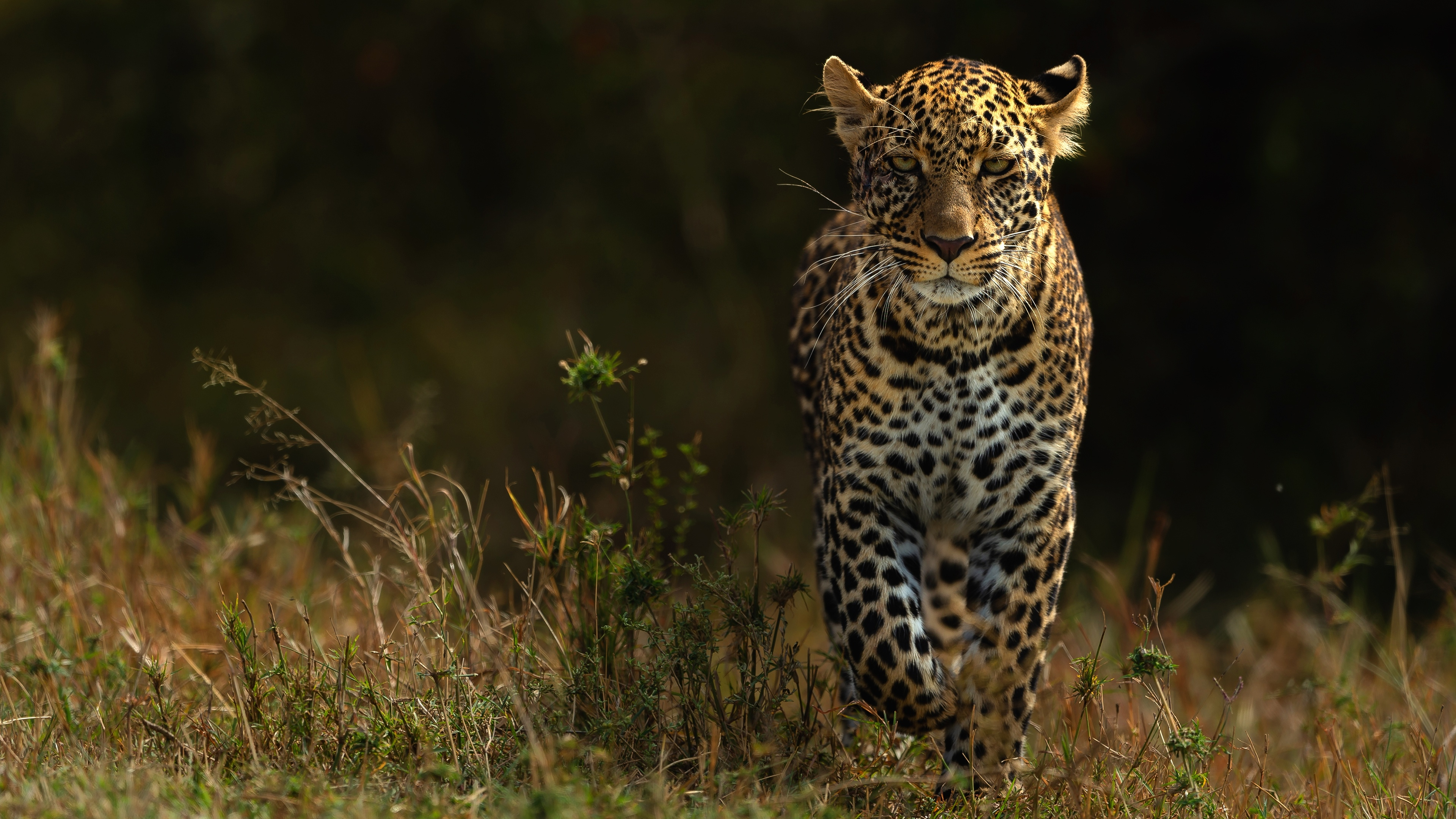 4 Wild Animals Hd Wallpapers Backgrounds